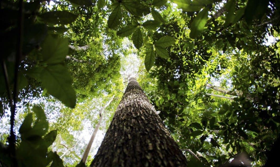 Fotografia da Amazônia