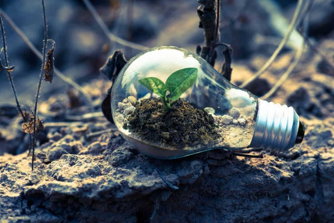 Fotografia com referência ao impacto socioambiental com planta dentro de uma lâmpada